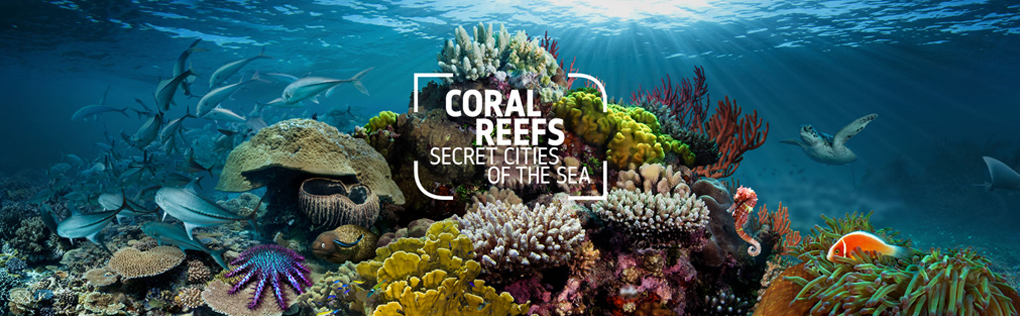 Coral Reefs are Beautiful