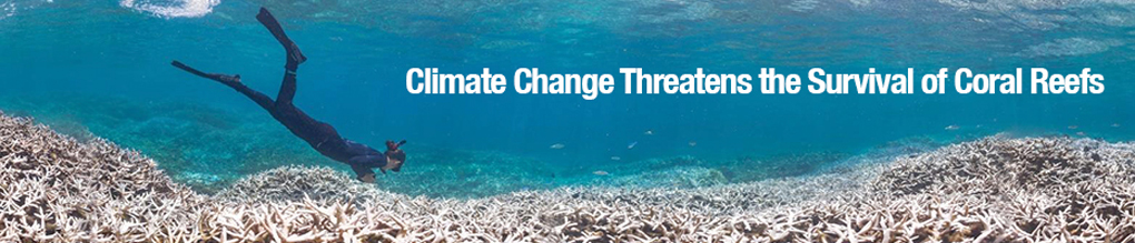 Human Activity is Threatening Coral Reefs